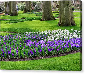 Netherlands, Flower Displays Canvas Print