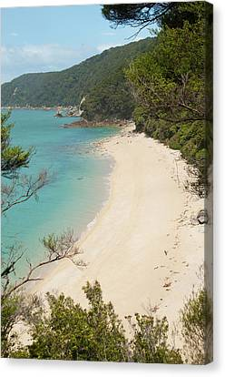 Tonga Canvas Print - New Zealand, South Island by Lee Foster