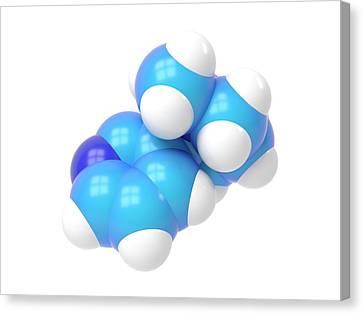 Nicotine Molecule Canvas Print by Indigo Molecular Images