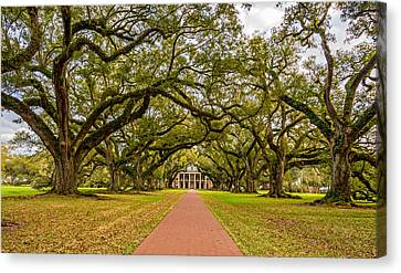 Oak Alley Plantation Canvas Print by Steve Harrington