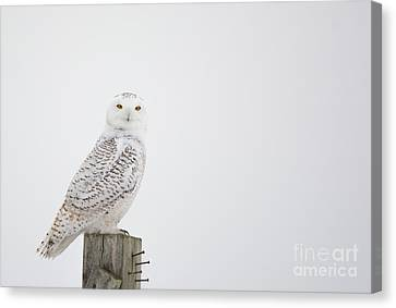 Observant Canvas Print by Cheryl Baxter