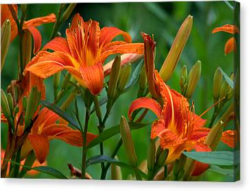 Canvas Print featuring the photograph Orange Lilly by Cathy Shiflett