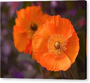 Orange Poppies Canvas Print by Rona Black