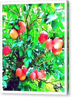 Orange Trees With Fruits On Plantation Canvas Print by Lanjee Chee
