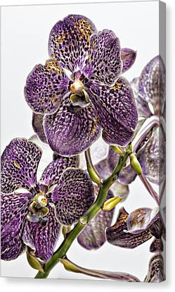 Orchid Study Canvas Print by Robert Ullmann