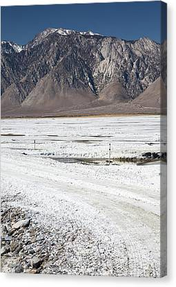 Owens Lake Re-irrigation Canvas Print by Jim West