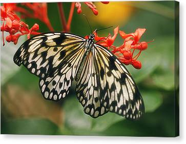 Paper Kite Butterfly Canvas Print