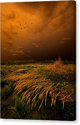 Passage Canvas Print by Phil Koch
