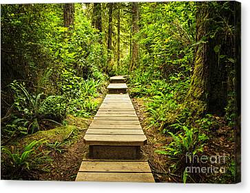 Path In Temperate Rainforest Canvas Print