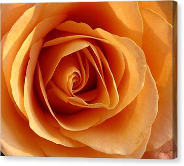 Canvas Print featuring the photograph Peach Rose by Gerry Bates