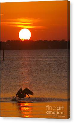 Canvas Print featuring the photograph Pelican Sunset by Tannis  Baldwin