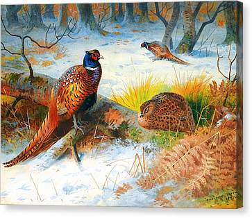 Pheasants Canvas Print by Celestial Images