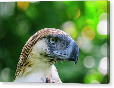 Michael Canvas Print - Philippine Eagle (pithecophaga Jefferyi by Michael Runkel