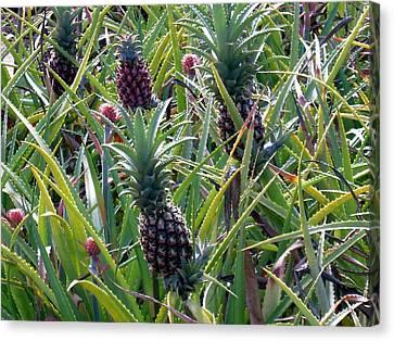 Pineapple Dance Canvas Print