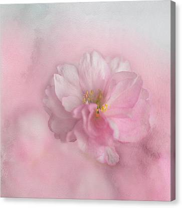 Canvas Print featuring the photograph Pink Blossom by Annie Snel