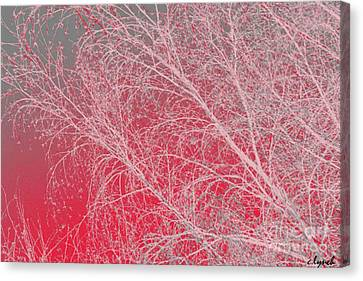 Pink  Canvas Print by Carol Lynch