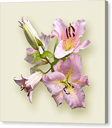 Pink Lilies On Cream Canvas Print by Jane McIlroy