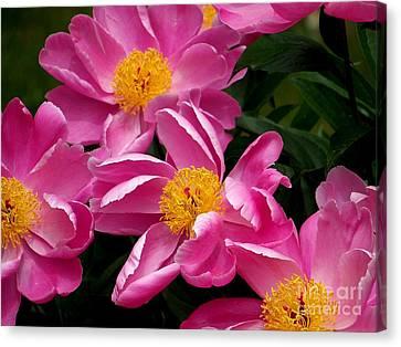 Pink Petals Canvas Print by Eunice Miller