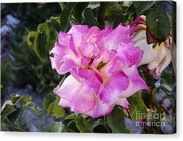 Pink Rose Canvas Print by Pravine Chester