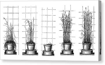 Plant Growth Experiments Canvas Print by Science Photo Library