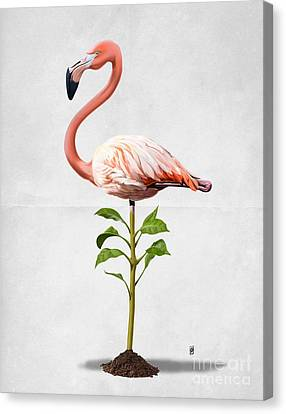 Flamingo Canvas Print - Planted Wordless by Rob Snow