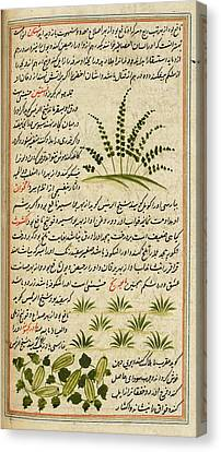 Plants Canvas Print by British Library