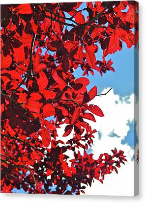 Plum Tree Cloudy Blue Sky 3 Canvas Print by CML Brown