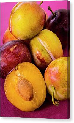 Plums Canvas Print by Aberration Films Ltd