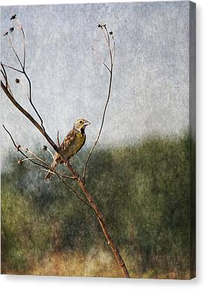 Poised Canvas Print by Dale Kincaid