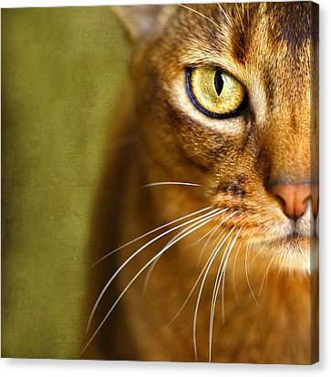 Portrait Of An Abyssinian Cat With Textures Canvas Print by Wolf Shadow  Photography