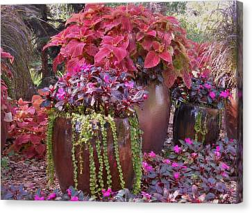 Pots Of Flowers Canvas Print