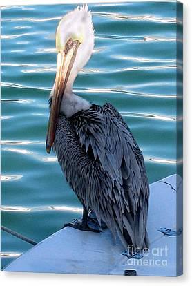 Precious Pelican Canvas Print by Claudette Bujold-Poirier