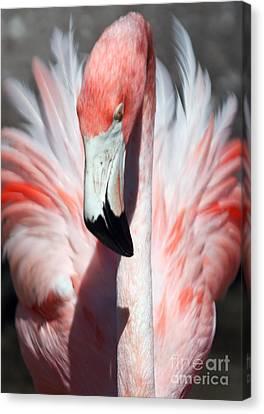 Pretty Flamingo Canvas Print