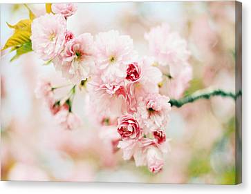 Pretty In Pink Canvas Print by Jessica Jenney