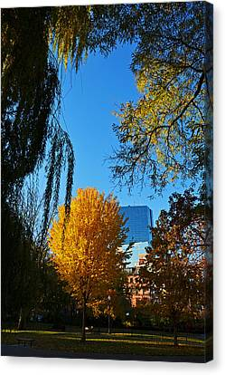 Public Garden Fall Tree Canvas Print by Toby McGuire
