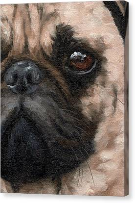 Pug Portrait Painting Canvas Print by Rachel Stribbling
