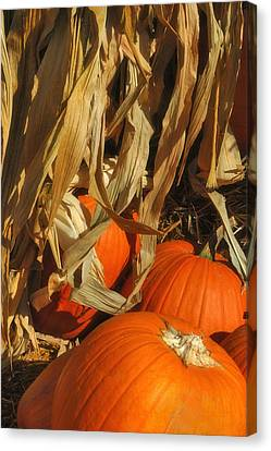 Pumpkin Harvest Canvas Print by Joann Vitali