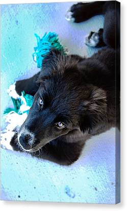 Puppy In Blue Canvas Print by Natalie Lise Harvey