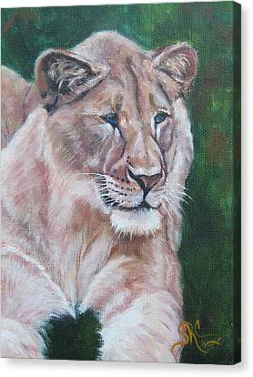 Queen Of The Beast,lioness Canvas Print
