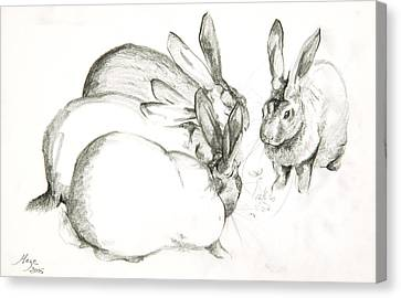 Rabbits Canvas Print by Jeanne Maze
