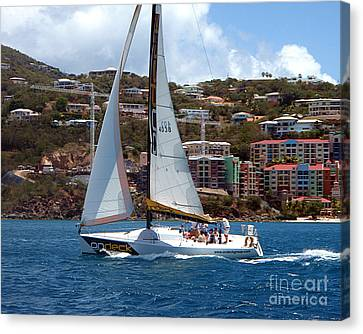 Racing At St. Thomas 1 Canvas Print by Tom Doud