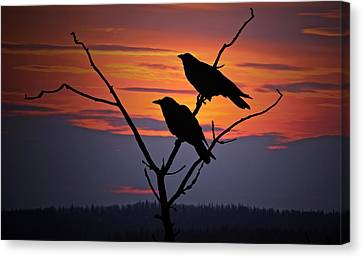 Crows Canvas Print - 2 Ravens by Ron Day