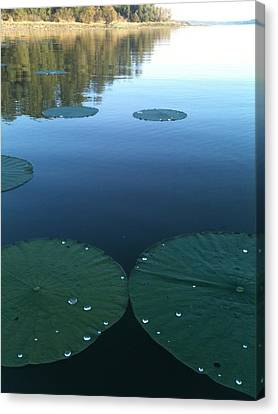 Rayburn Lilly Pads Canvas Print