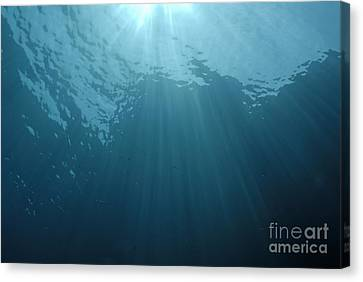 Rays Of Sunlight Shining Into Water Canvas Print by Sami Sarkis