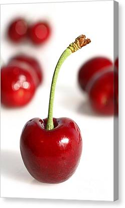 Red Cherries Canvas Print
