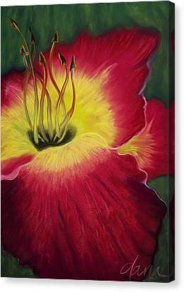 Red Day Lily Canvas Print by Dana Strotheide