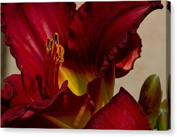 Red Lily Canvas Print by Ivete Basso Photography