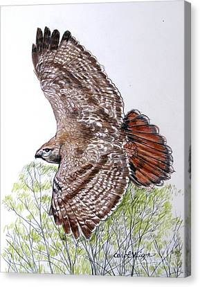 Red-tailed Hawk Canvas Print by Carol Veiga