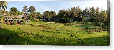 Rice Fields In Front Of Villas, Four Canvas Print by Panoramic Images