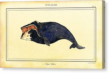 Marine Mammals Canvas Print - Right Whale by Juan  Bosco